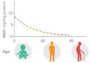 Nivån av NAD+ avtar med åldern